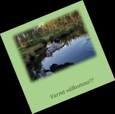 Svenska Spaniel Och Retriever Klubben